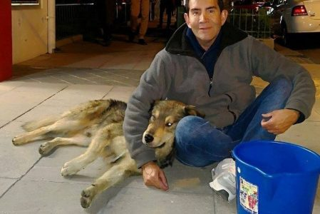 Bolivian Man Finds A Way to Save Every Stray Dog From Hunger for Free