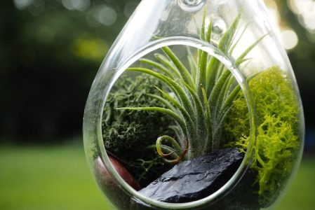 Air Plant Terrariums – Tiny, Exquisite Gardens for Your Home